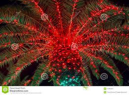 christmas palm tree stock photo image 47882201