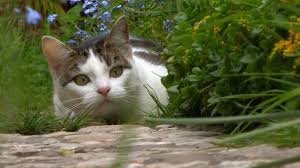 the truth about cats nat geo wild
