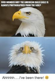 America Eagle Meme - ever wonder why the american bald eagle is always photographed