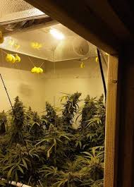 intake fan for grow tent grow room set up 101 by thecapn dude grows