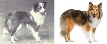 100 boxer dog how 100 years of breeding ruined ten popular dogs the dogington post