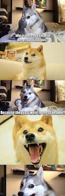 Pun Husky Meme - bring pun dog back pun dog dog and memes