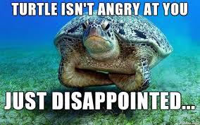 Shame On You Meme - you shame turtle parents meme on imgur