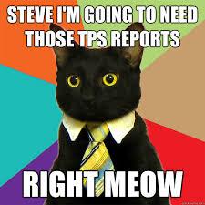 Steve Meme - steve i m going to need cat meme cat planet cat planet
