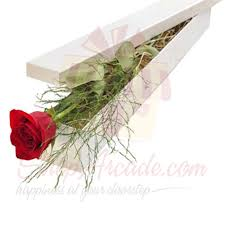 Best Place To Order Flowers Online Send Roses Gift To Pakistan Online Roses Delivery In Pakistan
