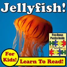 cheap amazing jellyfish find amazing jellyfish deals on line at