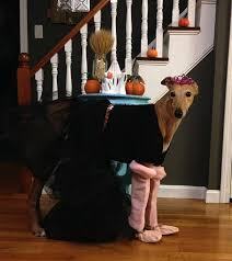 reader suggestions on how to have a frugal halloween frugalwoods