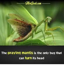 Mantis Meme - 25 best memes about dr mantis toboggan dr mantis toboggan memes