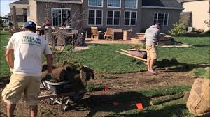 planting of privacy trees and shrubs youtube