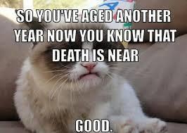 Grumpy Cat Meme Happy Birthday - pin by rodneigh farrow on grumpy cat pinterest grumpy cat