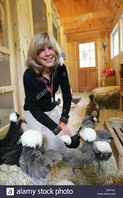 childrens author jan brett at home with chickens in norwell