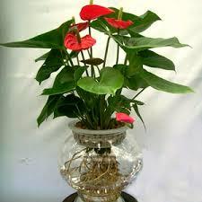 indoor flowering plants buy 6000 nursery plants n seeds