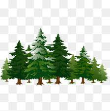 pine tree png images vectors and psd files free on