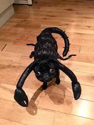 Scorpion Costume Scorpion Funny Pet Costume
