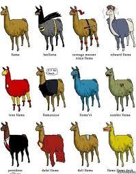 Different Types Of Memes - different types of llamas meme meme collection pinterest meme