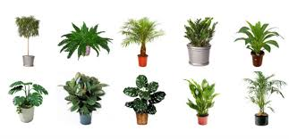 best plants for air quality the best 10 indoor plants that purify the air
