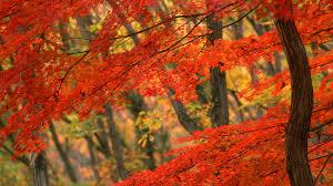 1920x1080 fall wallpaper download wallpaper 1920x1080 autumn leaves branch full hd 1080p