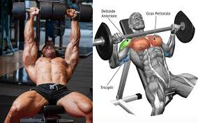 Training Bench Press Dumbbell Vs Barbell Bench Press U2013 Which One Is Better Strong Muscle