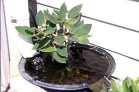 Indoor Garden Containers - water gardening