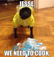 breaking bad meme jesse we need to cook says the cute pug dog