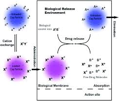 clay nanocomposites as engineered drug delivery systems rsc