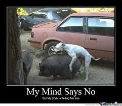 Bad Dog Meme - bad dog by mcdanger meme center
