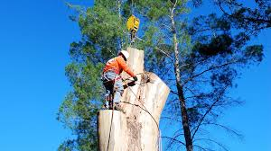tree removal tree trimming service for all ventura county