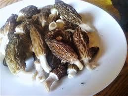 cuisiner des morilles morilles aux lardons et à la crème cuisiner avec micheline