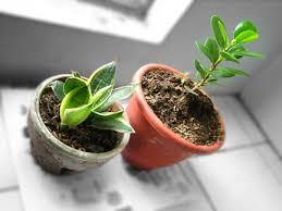 cute plant i got 2 new plants walked around qc circle too something new
