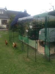 omlet chicken fencing chicken keeping omlet