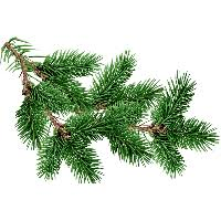 fir tree free png photo images and clipart freepngimg