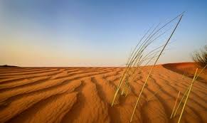 old spinifex rings little sandy desert australia wallpapers arabian desert western asia the arabian desert is located in
