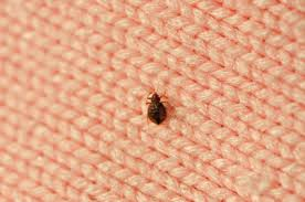 Dont Let The Bed Bugs Bite Index Of Images