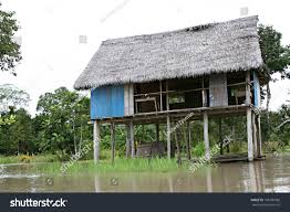 House Plans On Stilts Houses On Stilts Rise Above Amazon Stock Photo 198106082