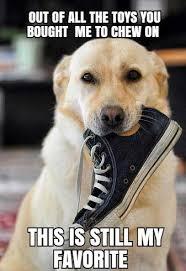 High Dog Meme - 17 unforgettable funny dog memes unleashed barking laughs