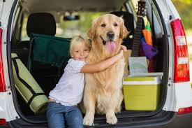 traveling with pets images Everything you need to know about traveling with pets mnn jpg