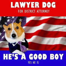 Lawyer Dog Meme - the very best of the lawyer dog meme