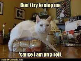 Roll Meme - i m on a roll meme generator captionator caption generator frabz