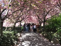 Botanical Gardens In Brooklyn by File Brooklyn Botanical Gardens Jpg Wikimedia Commons