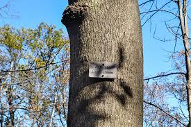 tree trail species ault park advisory council