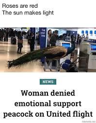 Peacock Meme - peacocks meme by oddmailman memedroid