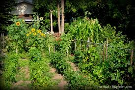 Types Of Vegetable Gardening by How To Plan A Vegetable Crop Rotation Hgtv