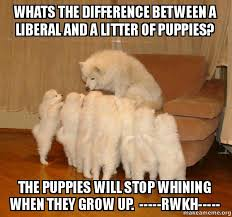 Stop Whining Meme - whats the difference between a liberal and a litter of puppies the