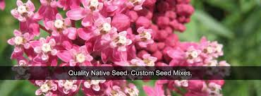 native plant nursery minnesota quality native seed custom seed mixes local ecotype midwest