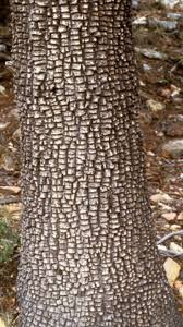 native plants of south texas 21 best texas native trees images on pinterest mountain oak