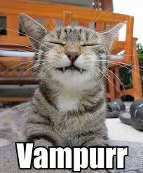 Cute Kitty Meme - cute kitty meme kitty photos funny tridanim