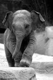 best 25 funny elephant ideas on pinterest elephant world