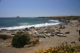 we love to see the sea lions at pismo beach places we love