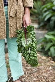 259 best gardening images on pinterest plants garden markers