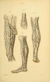 Human Anatomy Atlas 906 Best Human Anatomy Reference Images On Pinterest Anatomy